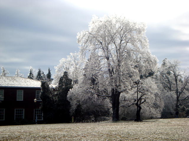 Ice Storm 08
